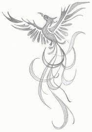 phoenix rising sketch